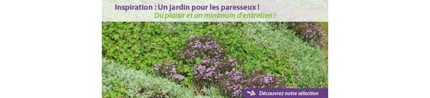 Sélection Jardin des paresseux  - Plantes avec minimum d'entretien