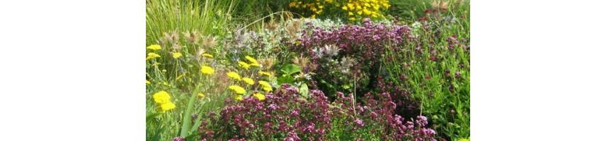 Plantes vivaces pour un jardin parfumé