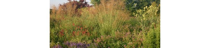 Prairie fleurie choix de vivaces et graminees