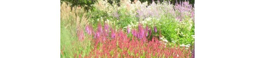Plantes vivaces pour une floraison fin d'été
