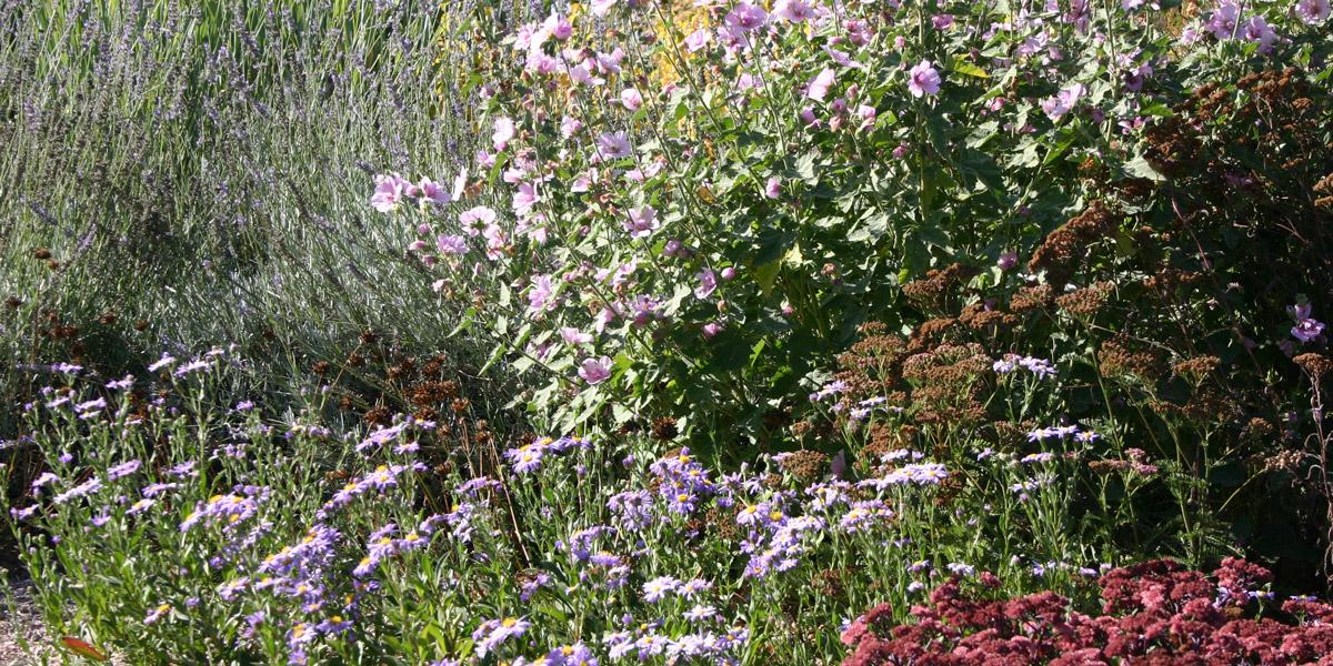 fleurs sans arrosage top pour un jardin sans arrosage plus moderne crer un jardin sans arrosage. Black Bedroom Furniture Sets. Home Design Ideas
